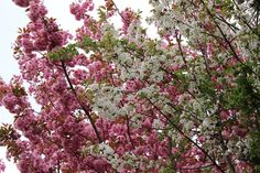 Frühlings-Spaziergang