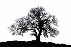 Oak Tree Silhouette by Carolyn Fletcher