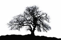 Oak Tree Silhouette by Carolyn Fletcher