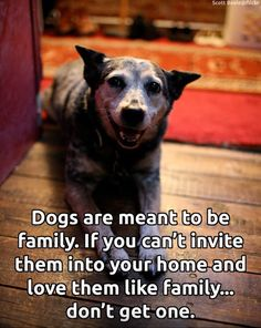 Dogs are meant to be family ❤️ They are not lawn ornaments or things to be left out in the elements.