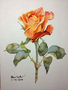 Kitipong ti ( prints & sayings in 20 Watercolor Rose, Watercolour Painting, Painting & Drawing, Watercolors, Rose Art, Watercolor Techniques, Botanical Art, Flower Art, Photo Art