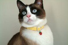 gato coleira - Pesquisa Google