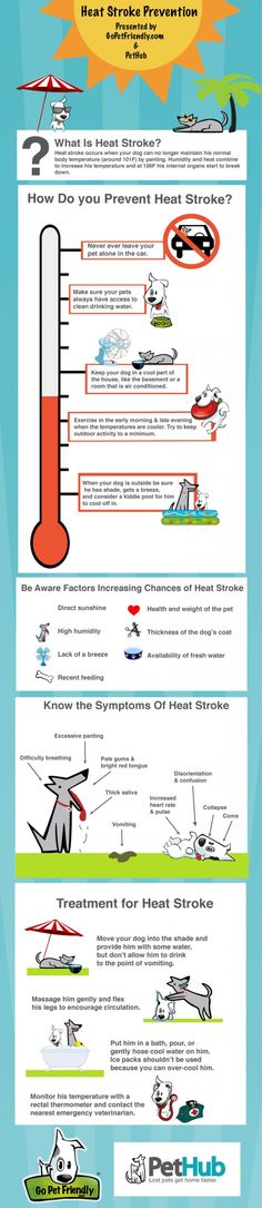 Infographic - Heat Stroke in Dogs