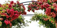 romantische gärten   romantischer Garten