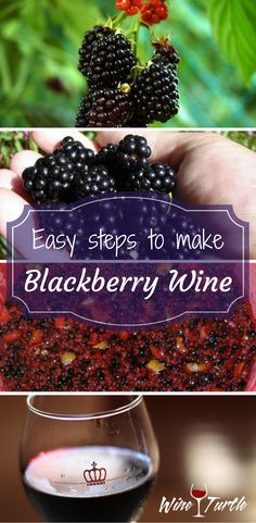 Homemade Blackberry Wine in 4 Easy Steps! Check out these easy steps on how to make delicious Blackberry Wine!Check out these easy steps on how to make delicious Blackberry Wine! Homemade Blackberry Wine Recipe, Homemade Wine Recipes, Homemade Alcohol, Homemade Liquor, Canning Recipes, Wine And Liquor, Wine And Beer, Wine Drinks, Beverages