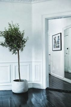 Sea of Girasoles: Interior: flat in Denmark black olive tree Black Furniture, Home Furniture, Black Olive Tree, Black Wood Floors, Indoor Trees, Indoor Plants, Black Floor, Painted Floors, Trendy Home