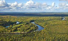 La rivière Vassiougan, dans les plaines de l'Ouest sibérien. (rive gauche de l'Ob).