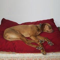 Hunde-Tiefschlaf im Kuschelkissen