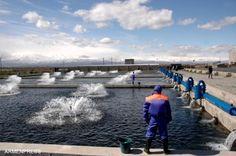 La cría de peces sigue siendo una de las ramas de mayor desarrollo de la economía armenia, ya que actualmente hay 255 criadores de peces operando en Armenia.