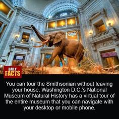 Daily Facts, National Museum, Weird Facts, Virtual Tour, Natural History, Viral Videos, Washington Dc, Funny Jokes, Community