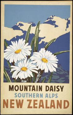 Vintage Travel Poster - New Zealand - Southern Alps - Mountain Daisy - 1930.