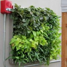 Green Living Wall Gallery | Green Living Technologies Living Wall, Living Green Roof, Green, Gallery, Living Roofs, Green Roof, Wall, Green Living, Wall Gallery