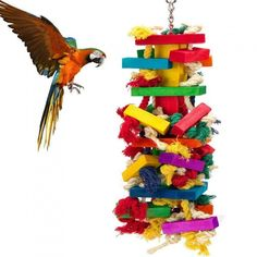 Hapa Knots Block Chewing Bird Toys – Pet Bird Cage Toys For Perfect for Agility training or Entertain Parakeet, Finch, Canary or Parrot… Macaw Parrot For Sale, Blue Gold Macaw, Diy Bird Cage, Parrot Toys, Love Your Pet, Bird Toys, Cockatoo, Parakeet, Wooden Blocks
