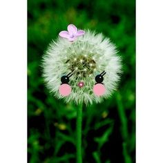 Etsy の dandelion print aceo size POOF by boopsiedaisy