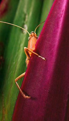 Katydid: Photo by Photographer Simon de Glanville