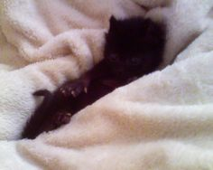 """This was my little angel Fatty. She was the most amazing kitten I have ever met. Just don't tell Miss Kitty I said that. """")"""
