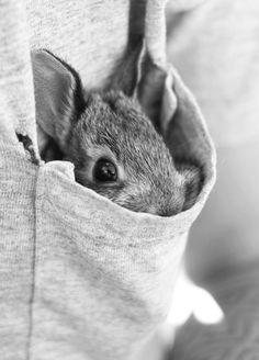 Pocket Bunny~♛