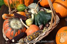 Pumpkins, squashes