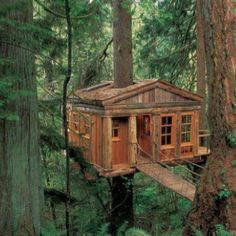 tree house for me