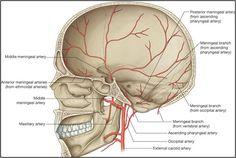 oftalmic artery - Google'da Ara