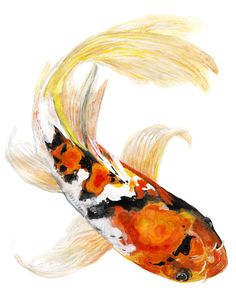 Butterfly Koi fish watercolor painting