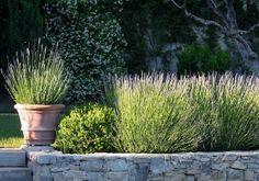 Limestone wall with lavender. Classic French garden. I love the fragrance of lavender... I have to grow some!