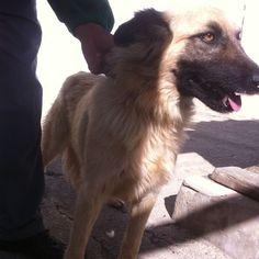 Luna espera una adopción en la Perrera Municipal de Teguise - http://gd.is/dvLx9V