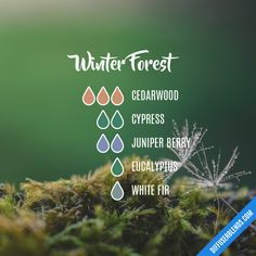 Winter Forest Essential Oils Diffuser Blend ••• Buy dōTERRA essential oils online at www.mydoterra.com/suzysholar, or contact me suzy.sholar@gmail.com for more info.