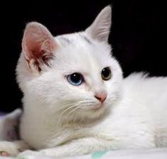 導讀:發現自己的愛貓,忽然對自己的貓糧沒胃口,主人一定很頭痛,如果沒有即時把剩下的食物收起來,貓咪用餐的習慣跟胃口,可能會越來越差,主人唯有狠下心,不要讓貓從小養成想吃就吃、不想吃待會也還有得吃的壞習慣。