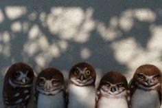 The Gang | Flickr - Photo Sharing!
