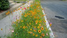 How to make the most of a sidewalk garden strip Low-growing flowers can boost your home's aesthetics without breaking the law.