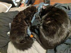 Demon brothers Locke and Leviathan napping. http://ift.tt/2lDb8mk