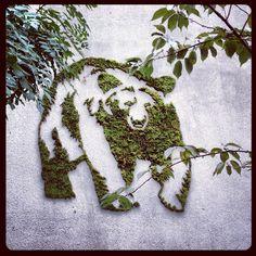 """Moss Graffiti,"" by Hugo Rojas #moss #graffiti #bear #Brooklyn #DAF12 (Taken with Instagram at Galapagos Art Space)"