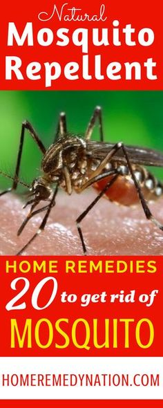 20 Cheap and Easy Natural Homemade Mosquito Repellents which really works | Home Remedy Nation #HomeRemedy #NaturalRepellent #Mosquito #Remedies