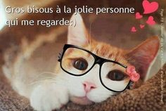 Gros bisous Neko, Bisous Gif, Chats Image, Jolie Images, Woodland Party, Positive Affirmations, Good Day, Four Square, Cats And Kittens