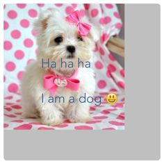 The dog I made the text agian