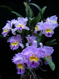 Low Cost Flowers Shipping And Delivery - An Anniversary Reward Without A Significant Selling Price Tag Cattleya Orchid - All Flowers, Types Of Flowers, Exotic Flowers, Amazing Flowers, Purple Flowers, Beautiful Flowers, Orchids Garden, Purple Garden, Orchid Plants