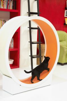 Catswall « Catwheel ~ Entertaining video of this in action with multiple cats on their home page!