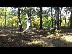 Adam Michal - Martial Arts 11/10/2015 - Forests Prague 4 (Part-3)