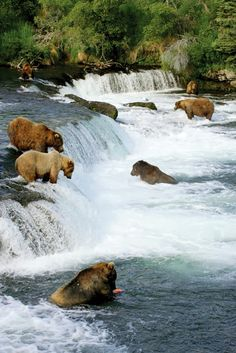 Katmai National Park , Alaska, USA: