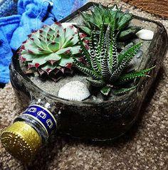 ¿Te encantan las plantas pero siempre se te mueren? Hoy te traemos un montón de ideas para decorar con suculentas, ¡las adorarás!
