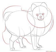 How to draw a pomeranian dog | Step by step Drawing tutorials