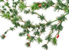 6 foot Artificial Mini Fir Pine Garland with Red Berries ** Click image to review more details.