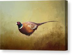Common Pheasant Art. Colorful photograph of a Ring-necked Pheasant Bird against a vibrant, painted Fine Art background. Canvas, Acrylic Prints, Posters and more. Visit our Shop to see the options and get inspired! Computer Kunst, Der Computer, Diana, Camera Art, Kunst Poster, Sports Art, Art Background, Texture Art, Stretched Canvas Prints