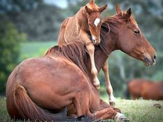 Beautiful baby horse picture