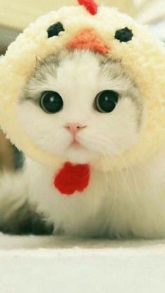 Cute Baby Cats, Cute Cats And Kittens, Cute Little Animals, Cute Funny Animals, Kittens Cutest, Funny Cats, Funny Cat Photos, Cute Animal Photos, Cute Cats Photos