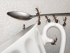 Learn how to get rid of ants in the kitchen using just a few simple tricks and DIY methods to chase insects from the house or apartment.