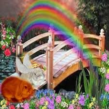 Rainbow Bridge Bunnies