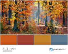 25 Color Palettes Inspired by the Pantone Fall 2017 Color Trends Fall Color Schemes, Color Schemes Colour Palettes, Fall Color Palette, Colour Pallette, Color Palate, Color Trends, Color Combinations, Pantone Fall 2017, Find Color