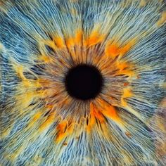 Close-up of a human eye, pupil and iris Photo